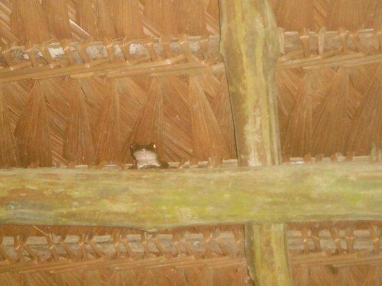 Heliconia Amazon River Lodge: Alrededores