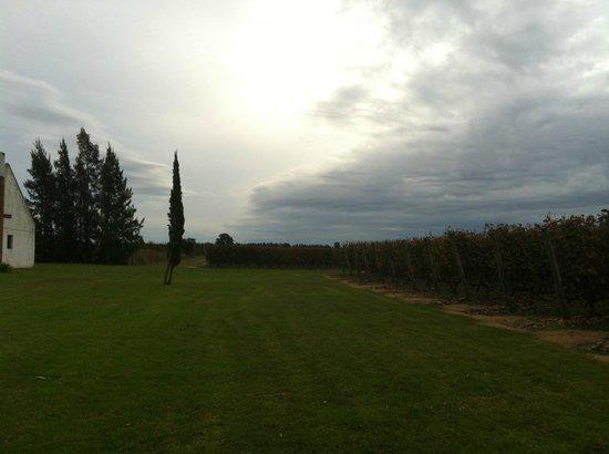 Bodega Bouza: Vista dos vinhedos
