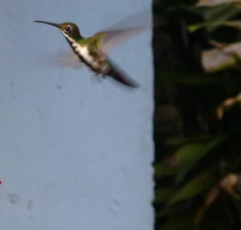 Grafton Beach Resort : Hummjing birds, a trip worth doing