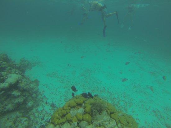 Portofino Beach Resort: Mexico Rocks