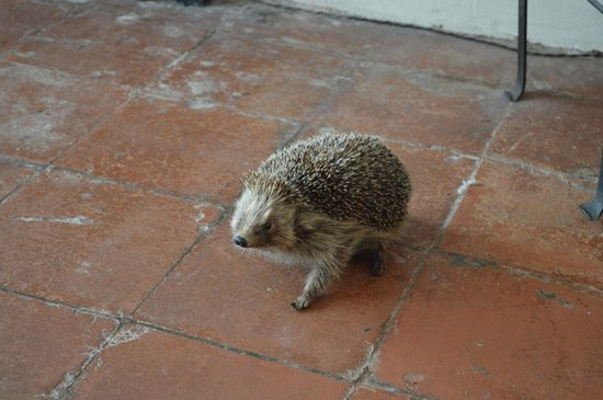 Charles Dickens Museum: The Kitchen Hedgehog