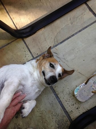 Maison Chablis Guest House : Simba the very friendly Jack Russel
