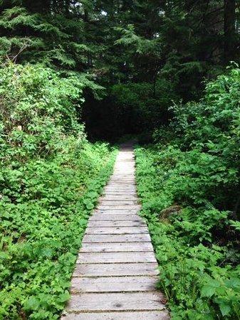 Schooner Cove: rainforest