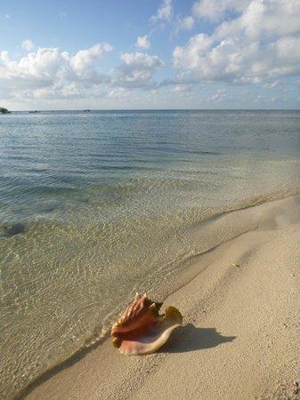 Isla Marisol Resort: Beach