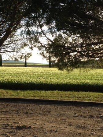 La Piverdiere : Les champs