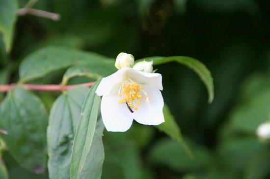 Knoops Park: Blüte