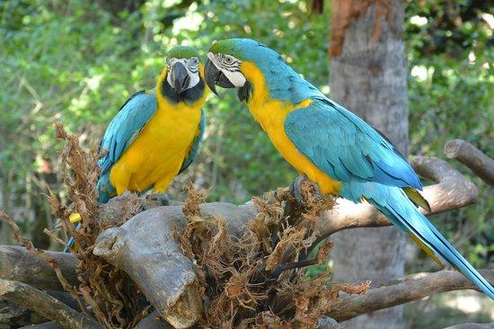 Dolphin Explorer: parrots