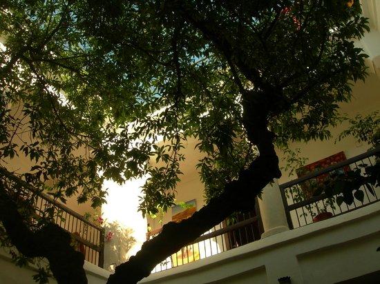 Riad Aldiana: Arbre dans patio