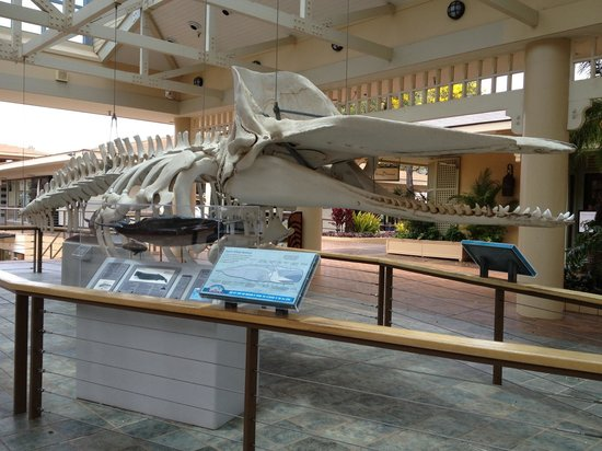 Whalers Village Museum: Whalers Village