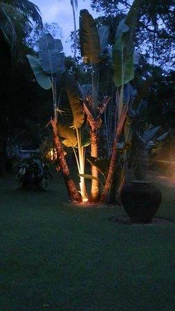 Nisala Arana: Amazing Garden