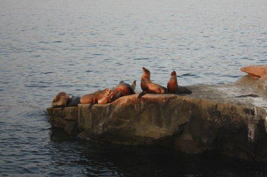 La Valencia Hotel: Seals in La Jolla