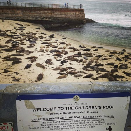 La Valencia Hotel: Seals at the Children's Pool- 5min walk from La V
