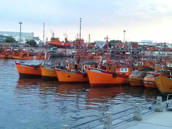 Embarcaciones típicas del Puerto de Mar del Plata