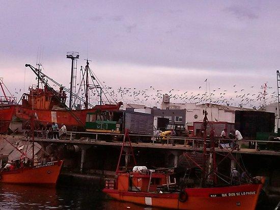 Puerto de Mar del Plata: El Puerto con los pájaros volando