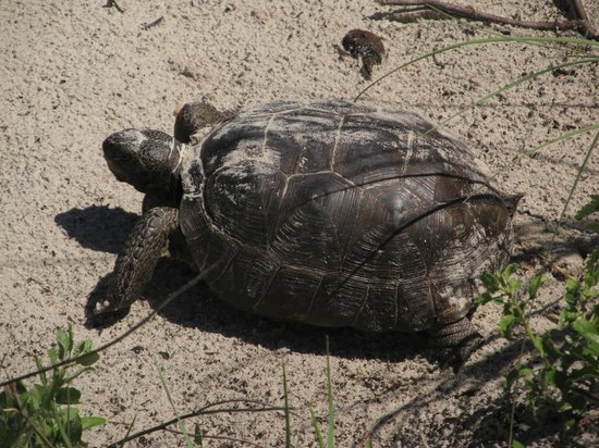 The Beach Club at St Augustine : Local Resident