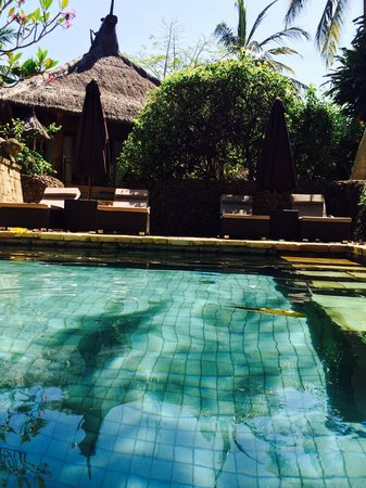 Novotel Lombok Resort and Villas: Garden pool for villas