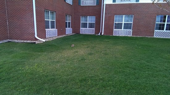 Country Inn & Suites By Carlson, Coralville: Bunny rabbits need comfortable accommodations too