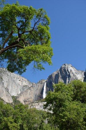 Yosemite Guide Service: Yosemite