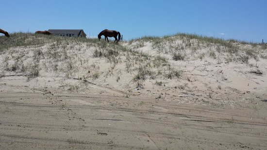 Oasis Suites Hotel: Stallion on the beach