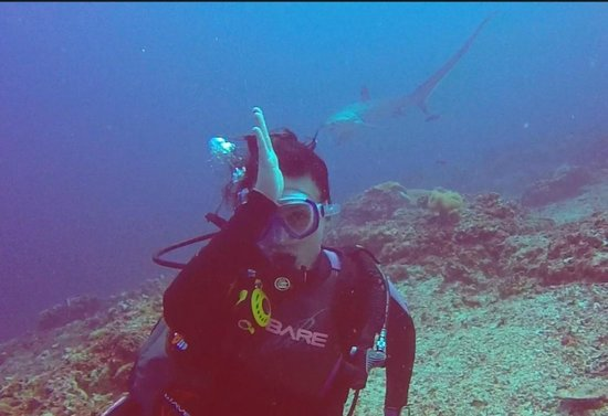 Thresher Cove Dive Resort: There are more sharks at Thresher Cove - Dive With Thresher Sharks