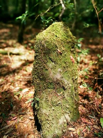 Mawphlang Sacred Forest: One of the numerous monoliths