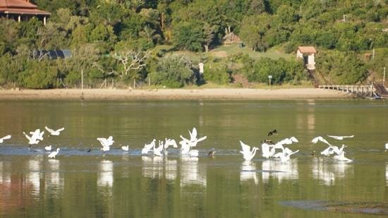 The Knysna Belle: morning birds