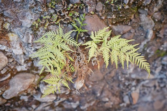 Alpine National Park: ferns