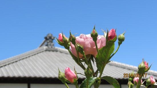 Kakyu no sato : 母屋とバラ