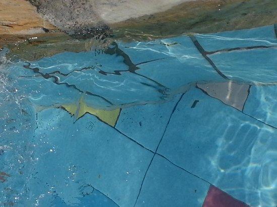 Family Life Tropical Resort: dirty pool