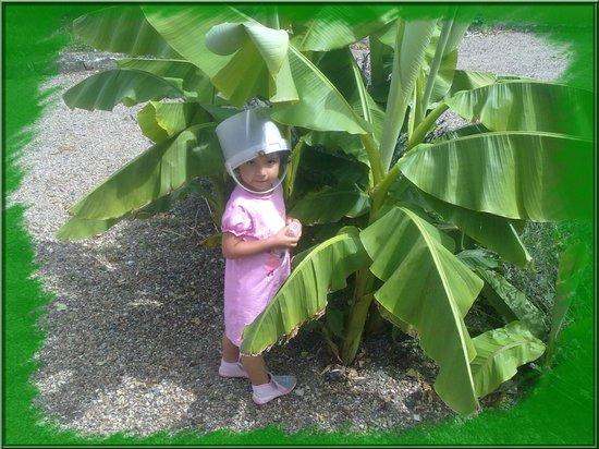 La Basinierre : Lenna et bananiers