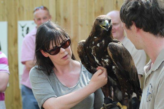 York Bird of Prey Centre: Golden Eagle
