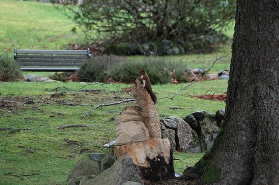 The Brander Lodge Hotel & Bistro: Red Squirrel using the Fox carving as a look out.