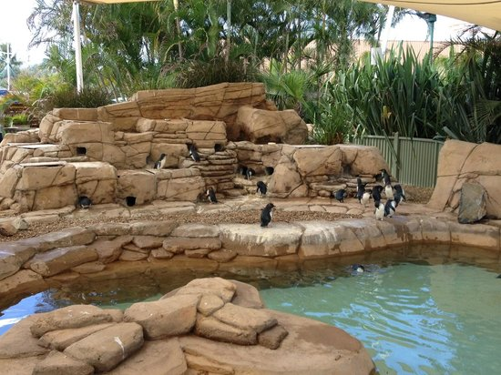 Sea World Resort: Some of the locals...
