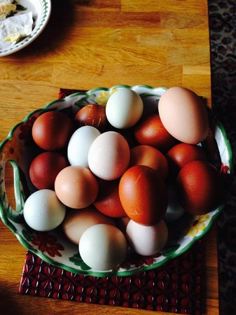 Forest View Bed and Breakfast: Fresh local Eggs