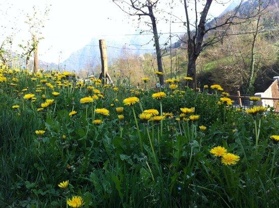 Agriturismo Il Talento Nella Quiete : flowers