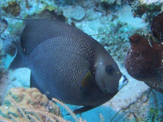 Karibik Diver: Ange Gris
