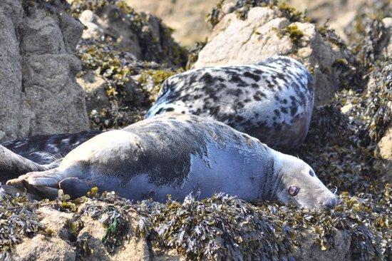 Réserve Naturelle des Sept Îles: Phoques