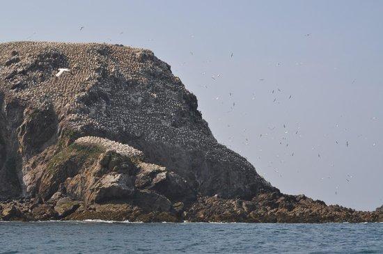 Réserve Naturelle des Sept Îles: Ile