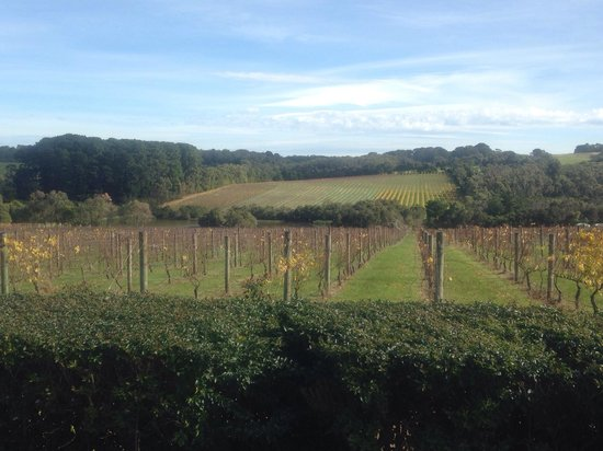 Vinetrekker Wine and Food Tours : Beautiful Willow Creek Vineyard. A must visit cellar door and you won't regret a visit to the re