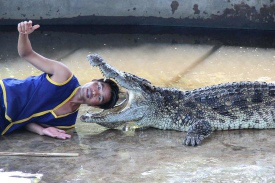 Samui Crocodile Farm : Crocodile show