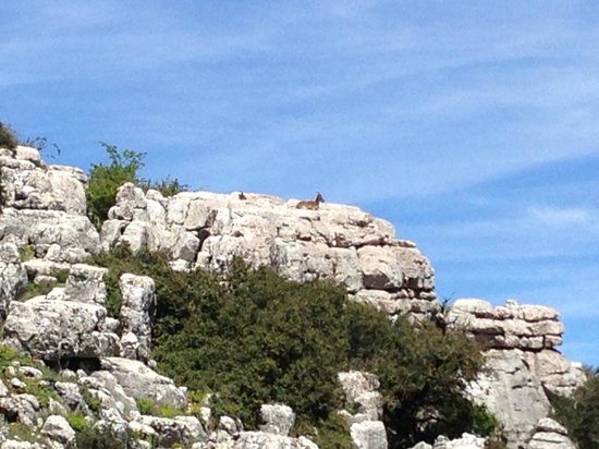 Parque Natural El Torcal: Mountain Goats