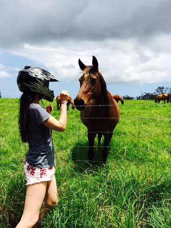 Paia, HI: Don't forget to say hi to the Horse! Don't mind my helmet.