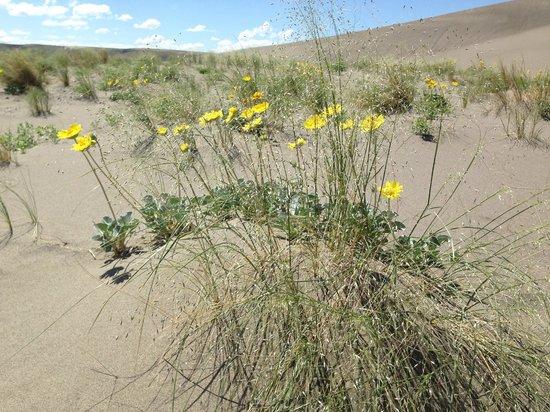 Bruneau Dunes State Park: Spring blooms