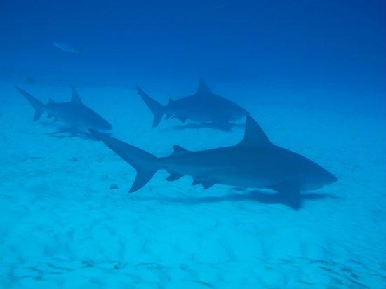 Experiencias Riviera Maya: Con tiburones