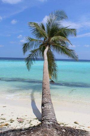 Kaani Beach Hotel : Lovely palm on the hotel beach