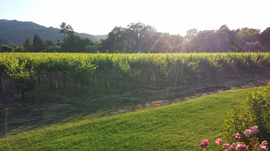 Harvest Inn: View of the vineyard from our patio