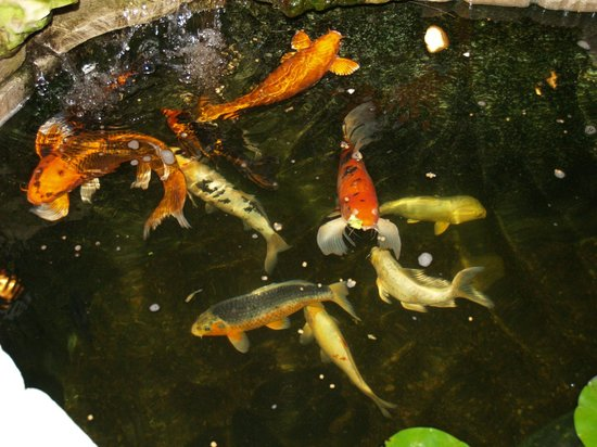 The Gallery Restaurant: One of our Ponds