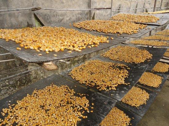 Hosteria Tunas y Cabras: Hydroponic agriculture.