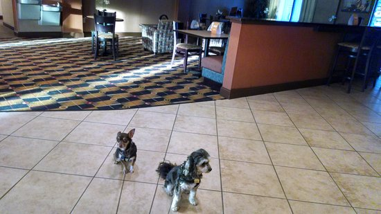 Comfort Suites At WestGate Mall: Rosie and Pepi's first hotel stay.