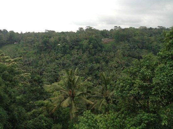 Four Seasons Resort Bali at Sayan: view from the hotel